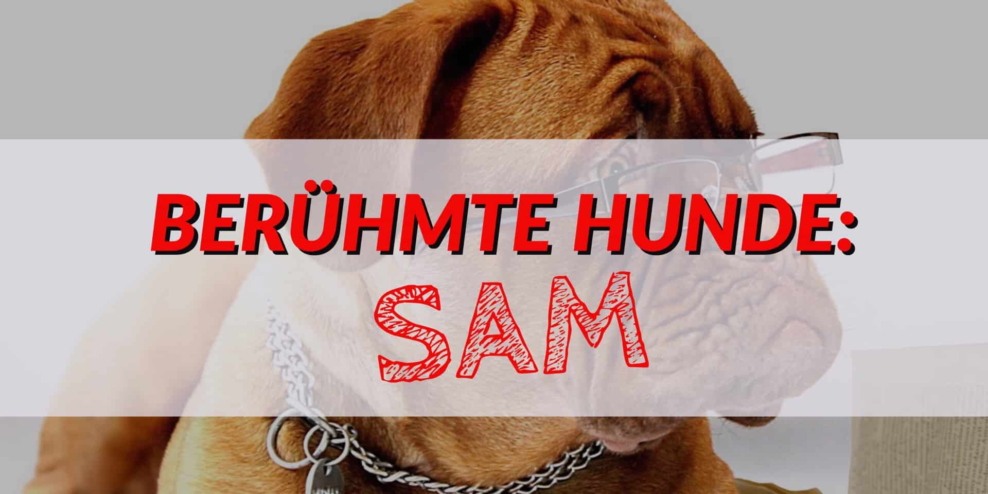 Berühmte Hunde: Sam